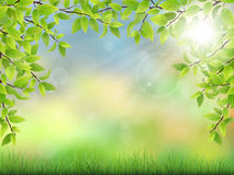Summer background with green leaves Royalty Free Stock Photo