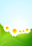 Summer background with green waves and camomiles Stock Photos