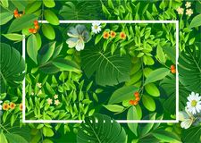 Bright natuer background with jungle plants. tropical leaves. stock illustration