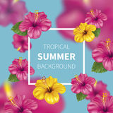 Summer background with Hibiscus vector illustration