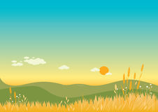 Summer sky and wheat fields Background. Illustration of a summer landscape on the hills and the barley field Royalty Free Stock Photography