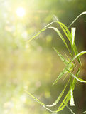 Summer background image of grass blades Stock Photography