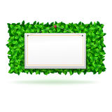 Summer background, leaves. Royalty Free Stock Photo
