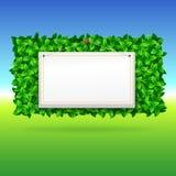 Summer background, leaves. Stock Image