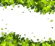 Summer background of leaves. Sunny summer background of green leaves Royalty Free Stock Photo