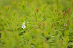 Summer Background Macro Green Plants bed Stock Photography