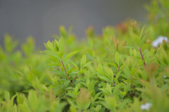 Summer Background Macro Green Plants bed Stock Photo