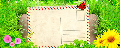 Summer background with old post card and green grass Stock Photos