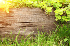 Summer background with old wooden plank Stock Image