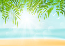 Summer background with palm leaves Royalty Free Stock Images