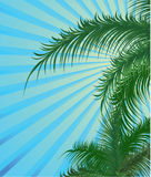 Summer background with palm trees Royalty Free Stock Photos