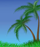 Summer background with palm trees Stock Image