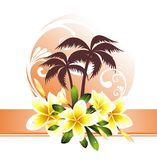 Summer background with plumeria Stock Photography