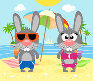 Summer  background with rabbits Royalty Free Stock Photo