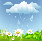 Summer background with rain Stock Photo