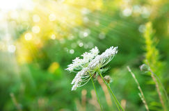 Summer background in the rays of sunlight. Green summer background in the rays of sunlight Stock Images