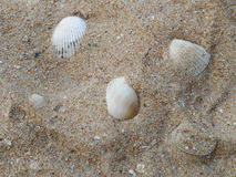 Summer background with sea sand and shells. Beautiful summer background with sea sand and shells Stock Photography