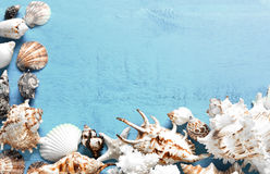 Summer background, sea shells on blue wood, top view, copy space. Stock Photography