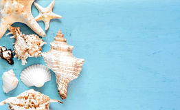 Summer background, sea shells on blue wood, top view, copy space. Royalty Free Stock Image
