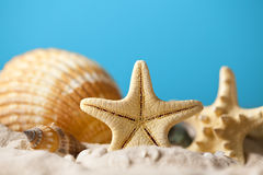 Summer background - seashells on beach Royalty Free Stock Photos