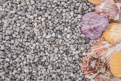 Summer background with seashells Stock Images
