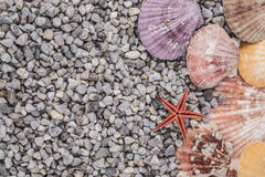 Summer background with seashells Stock Image