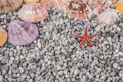 Summer background with seashells Royalty Free Stock Image