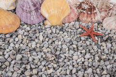 Summer background with seashells Royalty Free Stock Photography