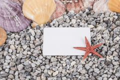 Summer background with seashells Royalty Free Stock Images