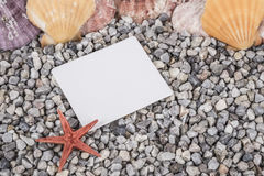 Summer background with seashells Royalty Free Stock Photos