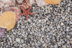 Summer background with seashells Stock Photo