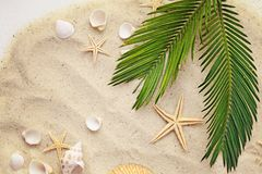 Seashells and sand. Summer background. seashells and palm leaf on sand royalty free stock photo