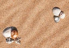 Summer background with seashells on sand Stock Photo