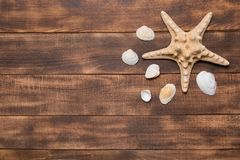 Summer background, seashells and starfish on wooden boards royalty free stock photos