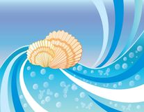 Summer background with shells. Stock Images