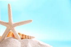 Summer background. Starfish and shell on sand with blue background royalty free stock photo