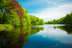 Summer background. Summer landscape with lake, flowers, trees, a Stock Image