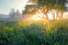 Summer background. Summer nature early in the morning. Colorful Royalty Free Stock Image