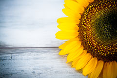 Summer   background with  sunflowers Royalty Free Stock Photo