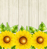Summer background with sunflowers Stock Photos