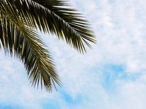 Summer background, tropical bright palm leaf on the blue sky. Copy space, summer vacation concept royalty free stock photography