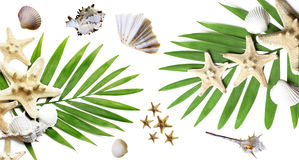 Summer background with tropical palms and seashells Stock Image