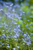 Summer background. Vertical photo of blue field flower Royalty Free Stock Image