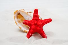 Summer background with white sand, starfish and shells Royalty Free Stock Photos