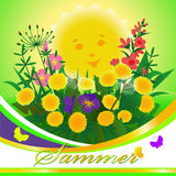 Summer background with wildflowers Stock Image