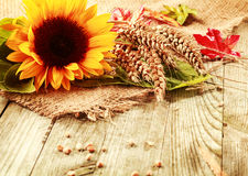 Summer Background With A Sunflower And Wheat Stock Photo