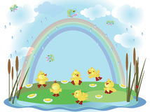 Summer Background With Ducklings Stock Photos