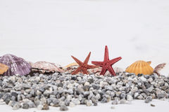 Free Summer Background With Seashells Royalty Free Stock Photography - 86657627