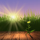 Summer background with wooden frame. Digital illustration of a green grass and wooden frame Royalty Free Stock Image