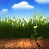 Summer background with wooden frame. Digital illustration of a green grass and wooden frame Royalty Free Stock Photography
